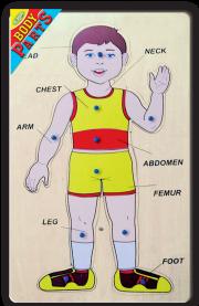 التركيبات التعليمية لأقسام الجسم ذكر إنكليزي